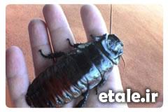 تهیه و فروش انواع حشرات بصورت خشک اتاله زنده در داخل الکل سفید فروش حشرات حشره